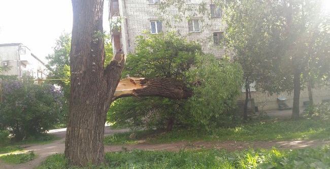 С начала шторма в Пскове произошло падение 13 деревьев: последствия устраняются, фото-1