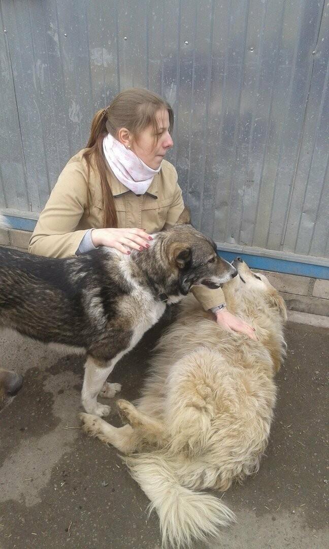 Волонтеры Псковского Молодежного центра провели субботник в пункте передержки собак, фото-1