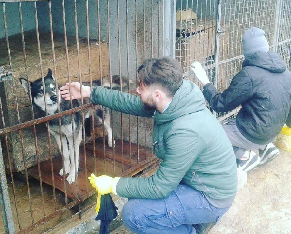 Волонтеры Псковского Молодежного центра провели субботник в пункте передержки собак, фото-2
