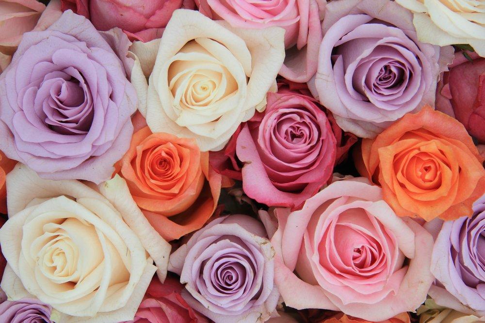В Псковской области уничтожат более 1000 кенийских роз и голландских гвоздик, фото-1