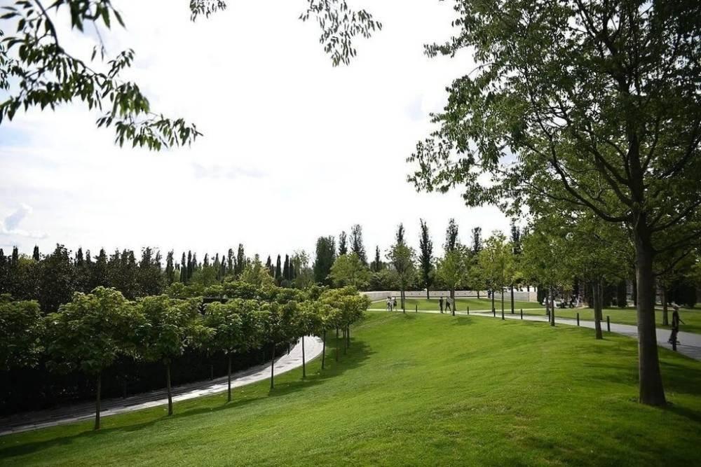 В псковском парке на улице Энтузиастов высадили 20 сосен и сиреней, фото-1